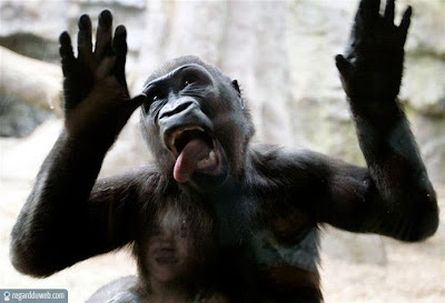 Photos droles et insolites Animal – Singe v69