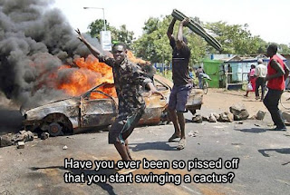 have you ever been so pissed of that you started swinging a cactus