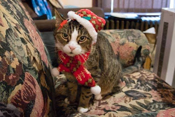 Dressing Up Pets for the Holidays, Good Idea or Not ?
