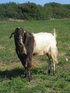 Local Fauna Mastichari Kos