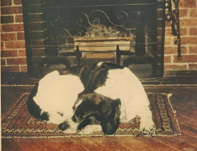 dog sleeping by fireplace