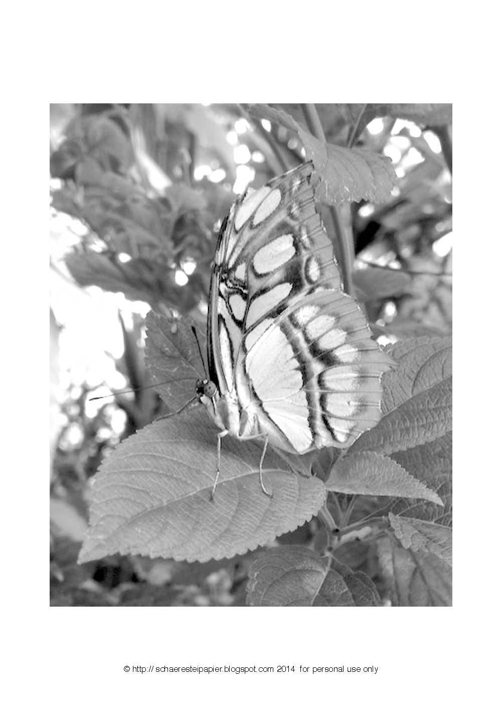 Malvorlage Schmetterling - Ausmalbilder - malvorlagen schmetterlinge