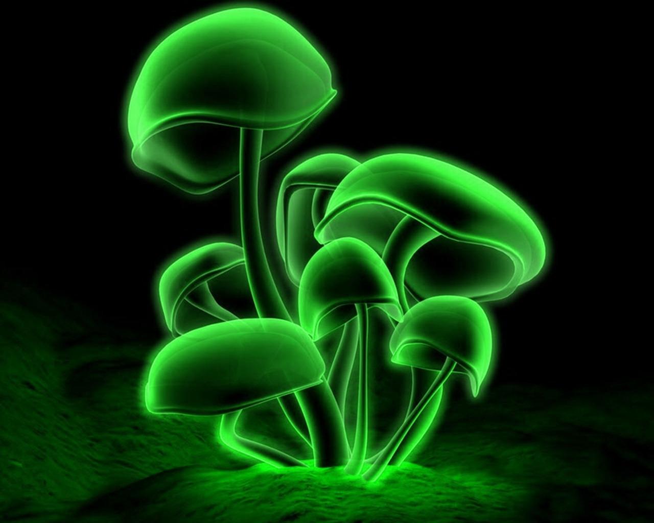 http://4.bp.blogspot.com/-q6CeklEKVbk/TqBHL1KKLvI/AAAAAAAAAE0/YDk0cIj_-Lo/s1600/green-mushroom-wallpaper-tab.jpg