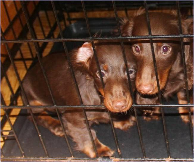 The Wiener Sisters