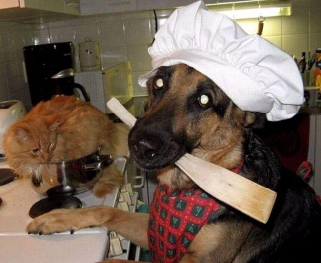 собака готовит кота