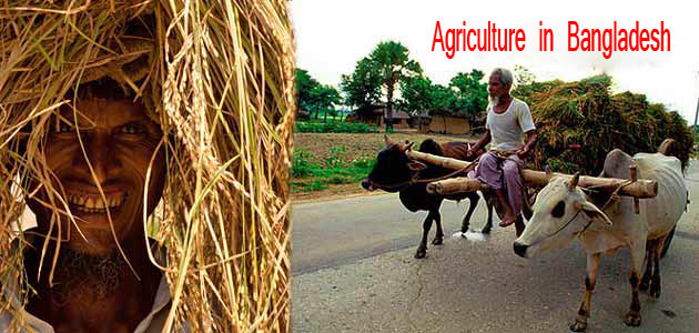 my ambition agriculture Age no barrier to organic farming ambition in vietnam's hoi an  born to a family  of farmers in tra que, le van so started farming at the age of 10  i consent to  the use of my personal data by mediacorp and the mediacorp.