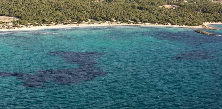 Es Pregons naturist beach in Mallorca