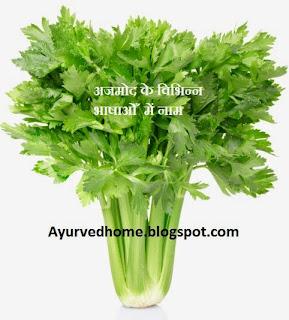 अजमोद के विभिन्न नाम , different name of celery plant