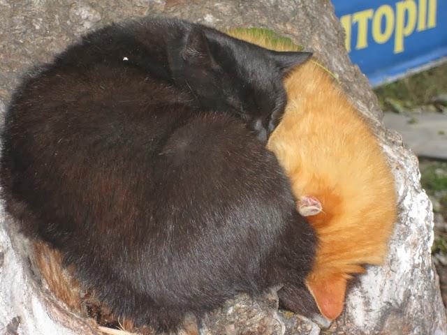 бездомные чёрный и рыжий кот