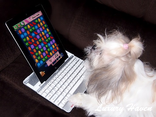 vitacost candy crush pet shopping