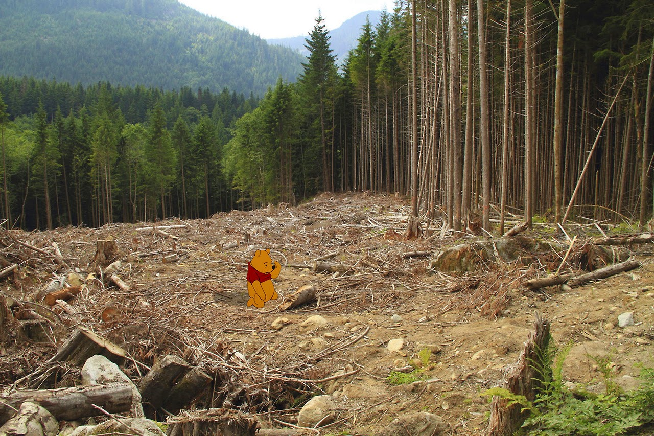 Winnie the pooh in his deforested home