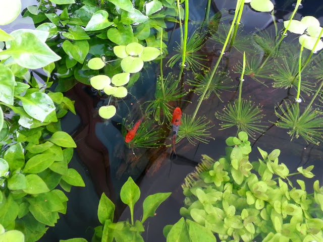108 litre puddle garden outdoor balcony pond page 2 for Balcony koi pond