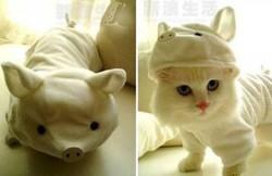 Kucing Pake Kostum