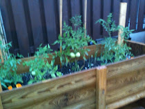 Vegetable Garden in wooden planter
