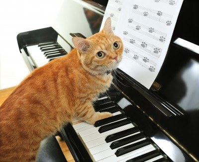 Image result for Cute Kitty Playing Piano