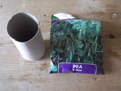 Allotment Tips - Sowing Peas - Cardboard Tubes