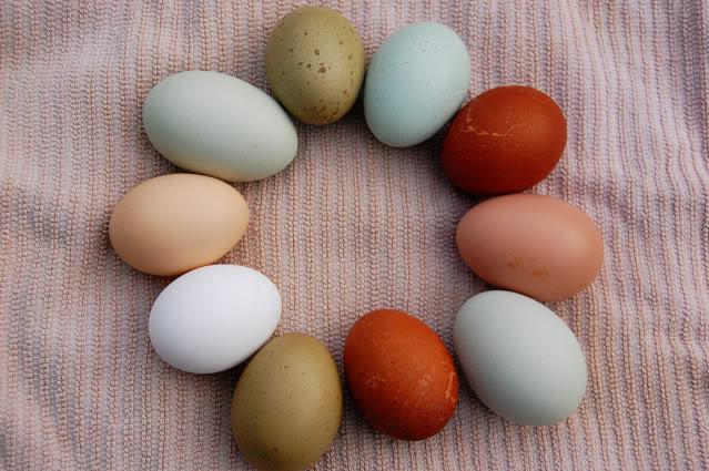 Gà đẻ trứng Phục Sinh