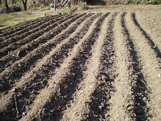 Visi n profunda de la ciencia siembra y cosecha de - Preparacion de la tierra para sembrar ...
