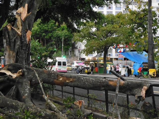 Árvore derrubada pelo vento em Botafogo/Foto: Marcelo Migliaccio