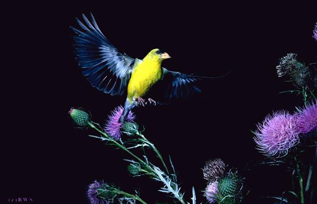 நான் பார்த்து ரசித்த புகைப்படங்கள் சில.... - Page 2 Flying+Birds+%25283%2529