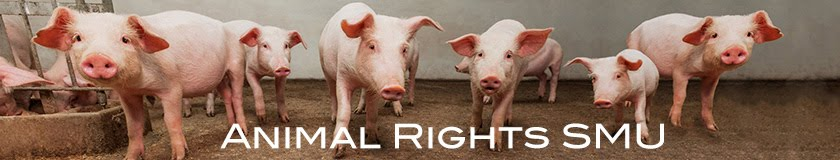 Animal Rights - SMU