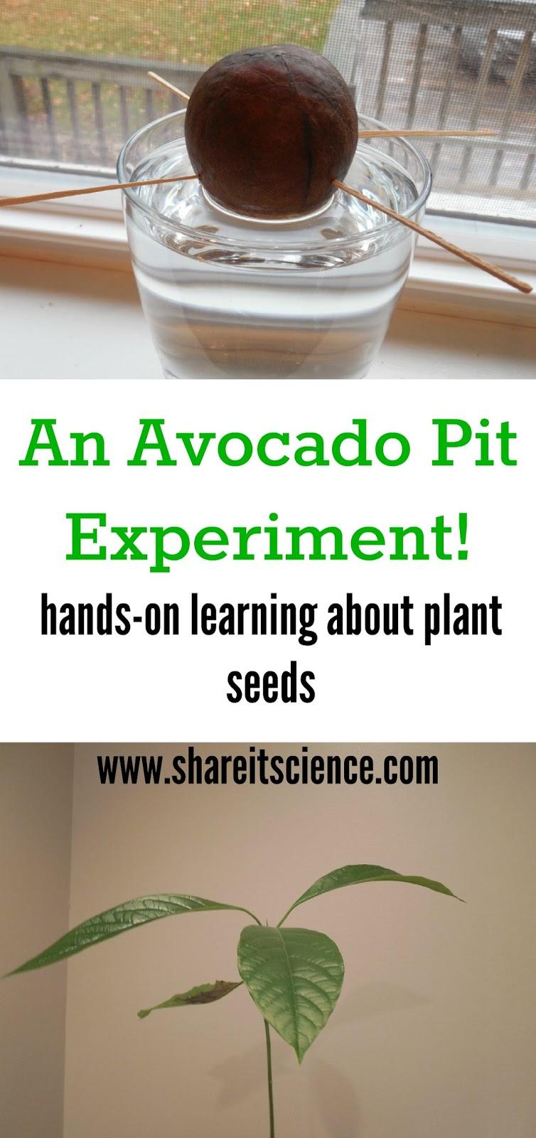 germination experiment essay