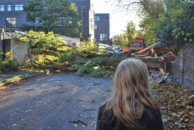 Fallen tree blocks Ivy Road: UK storm