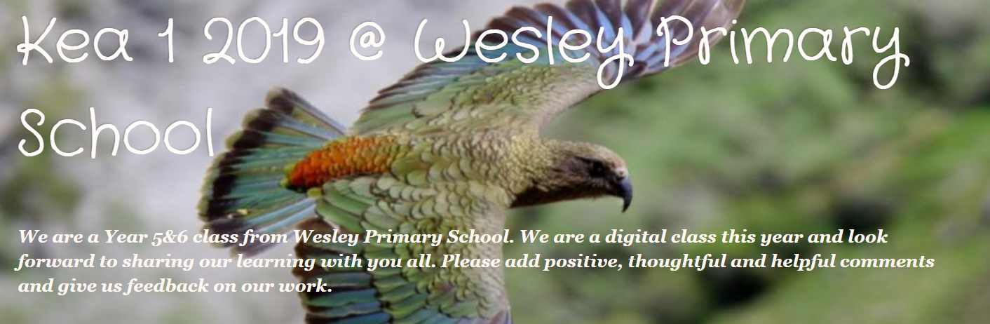 Kea 1 2019 @ Wesley Primary School