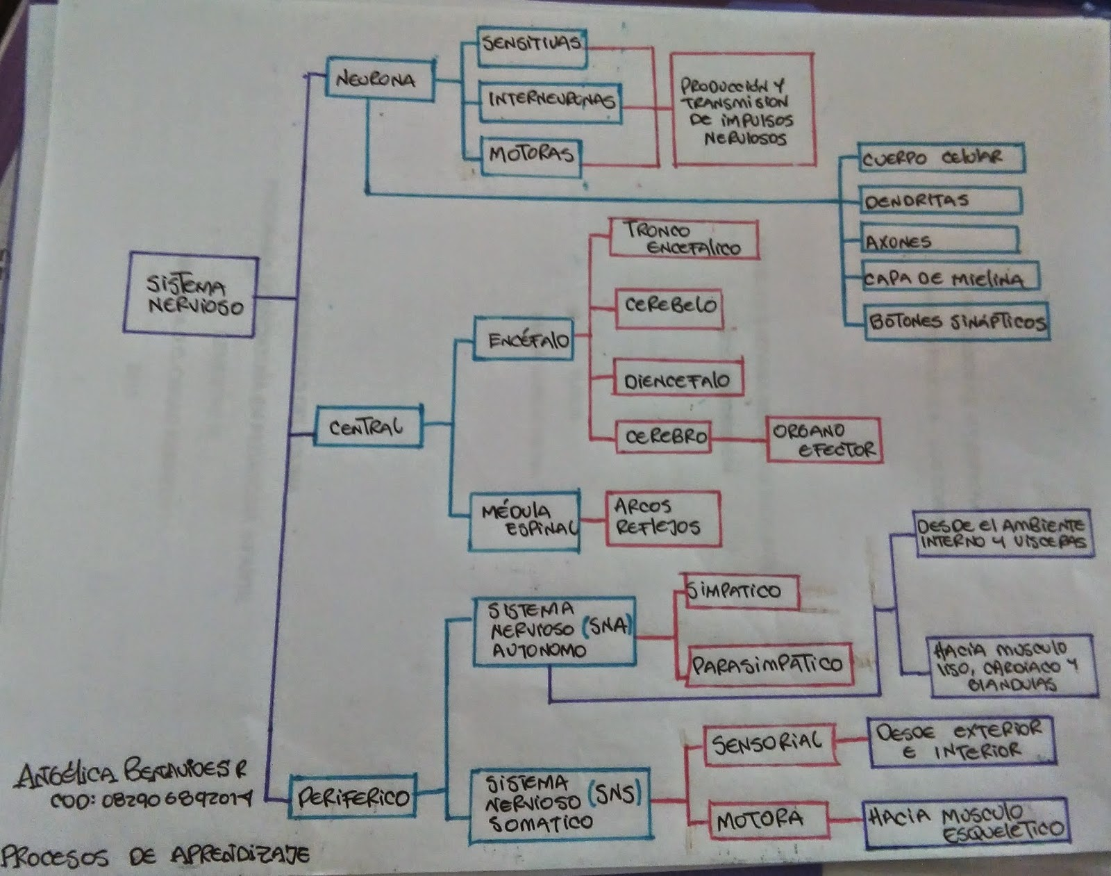 Procesos De Aprendizaje : Núcleo N°1 Procesos Neurolofisiologicos y ...