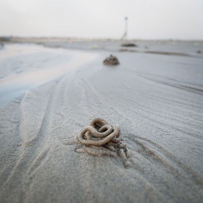 Worm Cast, West Wittering 2011 © Graham Dew