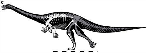 Seitaad dinosaurios del jurasico