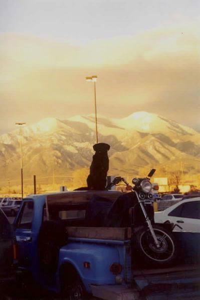 Apa-itu-Taos-hum