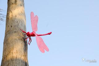 Dragonfly Woods, el nuevo bosque de las libélulas de Ushuaïa