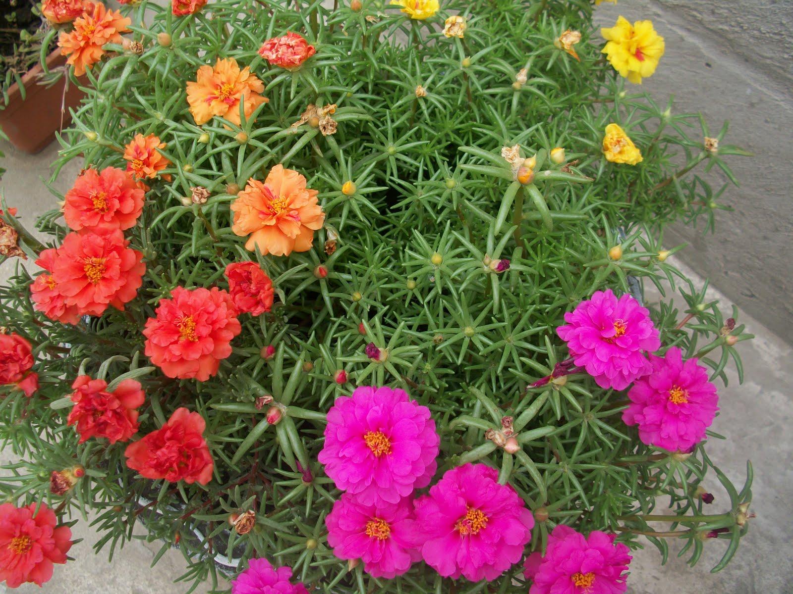 Imagenes Bonitas Con Flores Y Plantas 4a Parte Cerrado Busca La 5a - Flores-bonitas-para-jardin