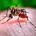 Salud solicita acción para prevenir el virus del chinkungunya