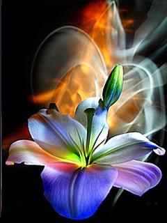 Rosas con brillo flores hermosas lindas hermosas for Bajar fondos de pantalla en movimiento para android