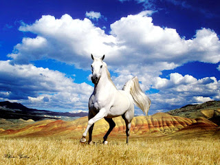 White Horse and Awesome Clouds HD Wallpaper