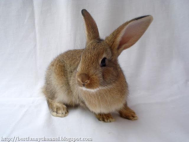 Nice red bunny
