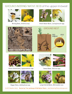Pollinator Handouts