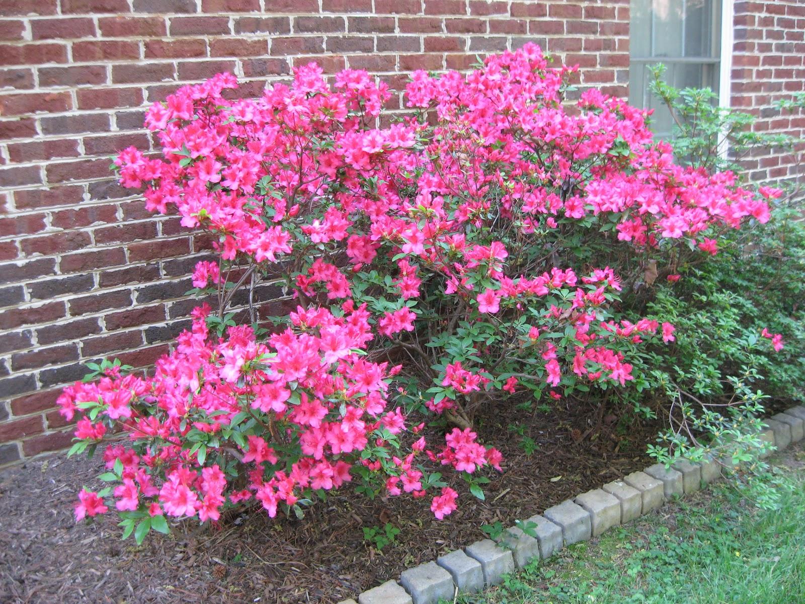 Bumble lush garden spring blooms for The azalea