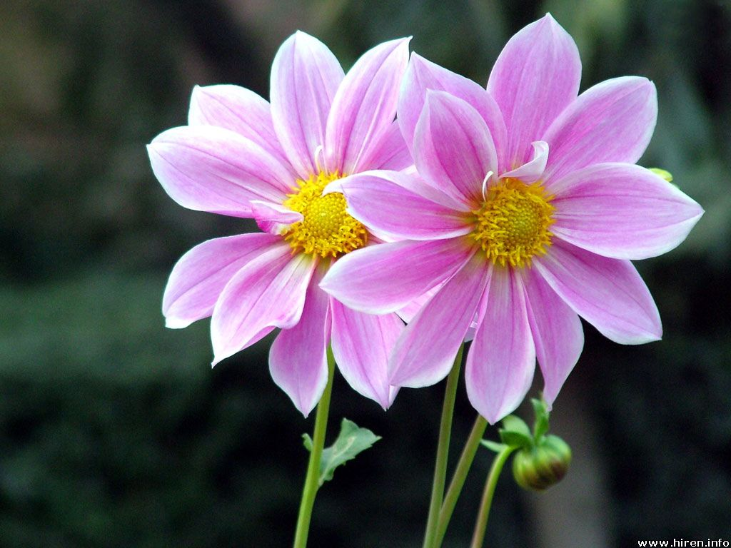 Beauty Of World Attractive Flowers