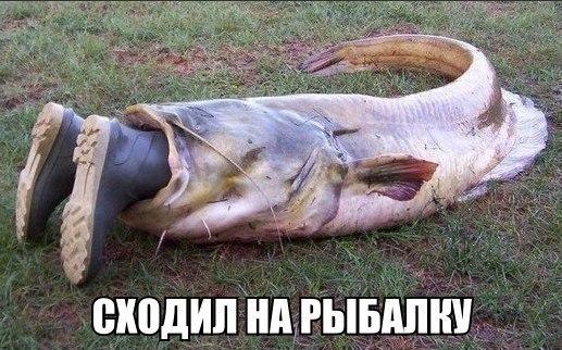 Ловля сома на Северском Донце