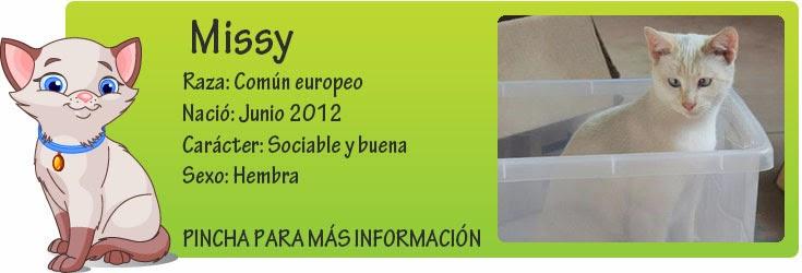 http://mirada-animal-toledo.blogspot.com.es/2012/11/missy-dulce-angelito-en-la-calle.html