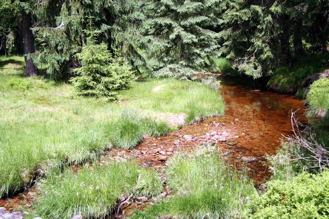 Nebenbach der Großen Iser im schlesischen Teil des Isergebirges