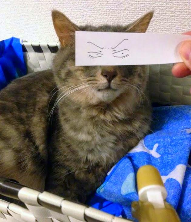 cartoon eyes for cat
