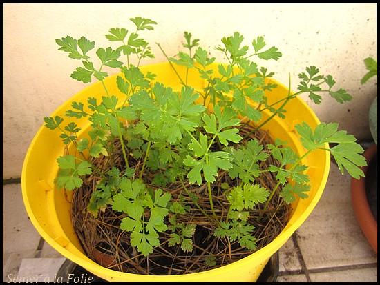 persil pot