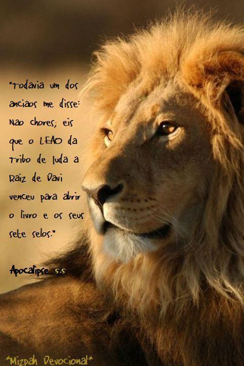 O Leão de JUdah