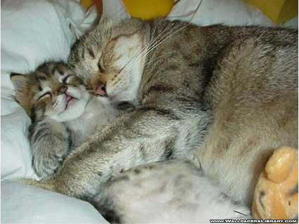 Funny Image Gallery: Dailymotion Funny Cats a Animals video!