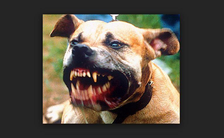 Un perro fue condenado a cadena perpetua