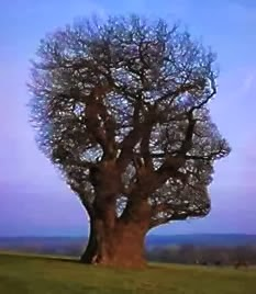 Imagination Tree